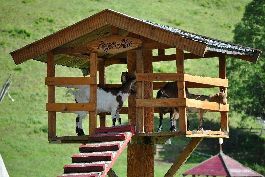 Klettergerüst Ziegen : Bilder & videos feriengut oberhabach : bauernhaus tirol